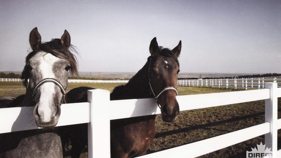 Ranch vinyl fence for horses and riding arenas